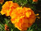 サムネイル:夕暮れの花