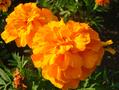 次の写真のサムネイル:夕暮れの花