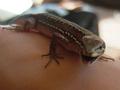 前の写真のサムネイル:手乗りは虫類