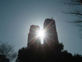 次の写真のサムネイル:都庁から差す光