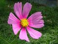 前の写真のサムネイル:花