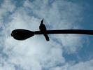 サムネイル:街灯の上のカラス