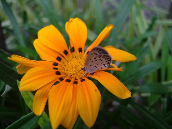 写真:花と昆虫